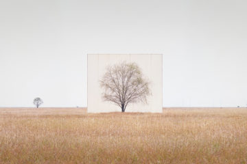 Myoung_Ho_Lee_Tree...3,2011