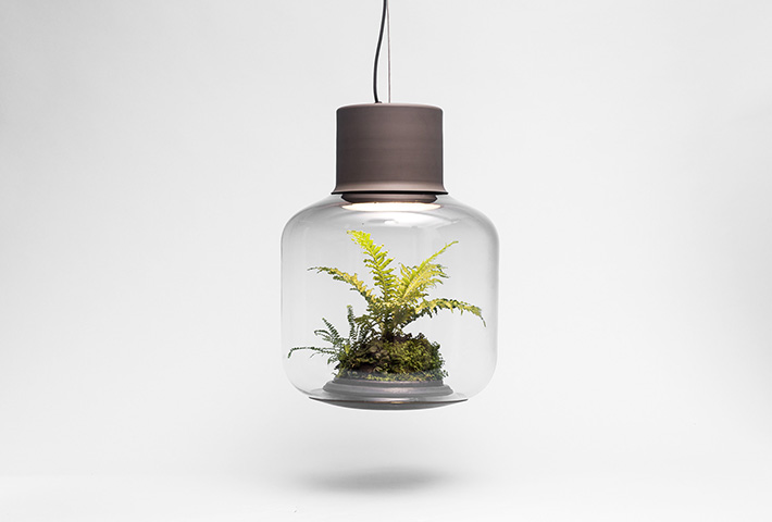 A Lamp Containing A Self-Sustaining Ecosystem