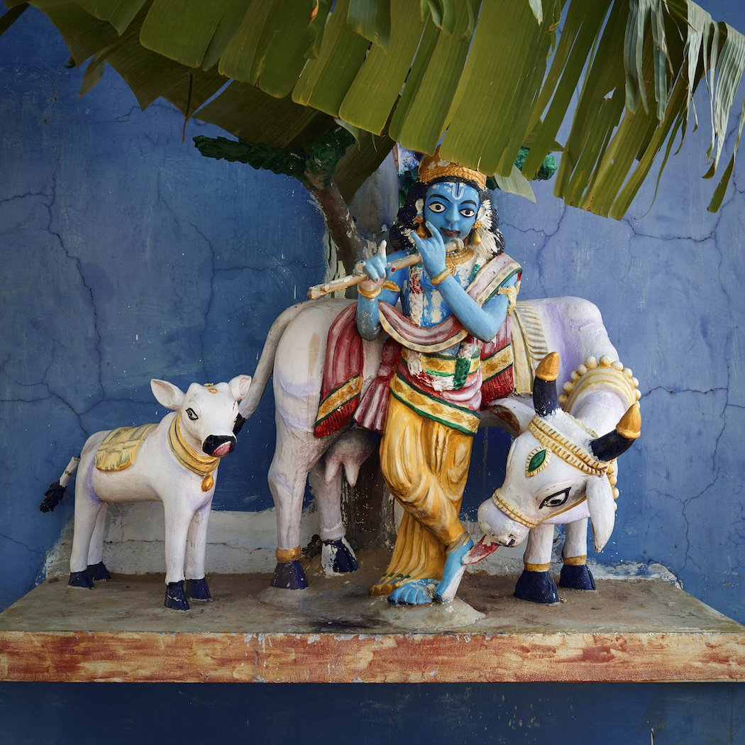 Krishna playing the flute with Nandi. Kolundampattu, Tamil Nadu, India, 2014