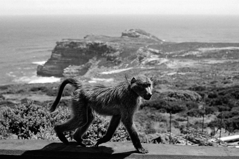24h Cape Town-10