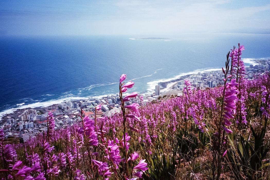 24h Cape Town-4