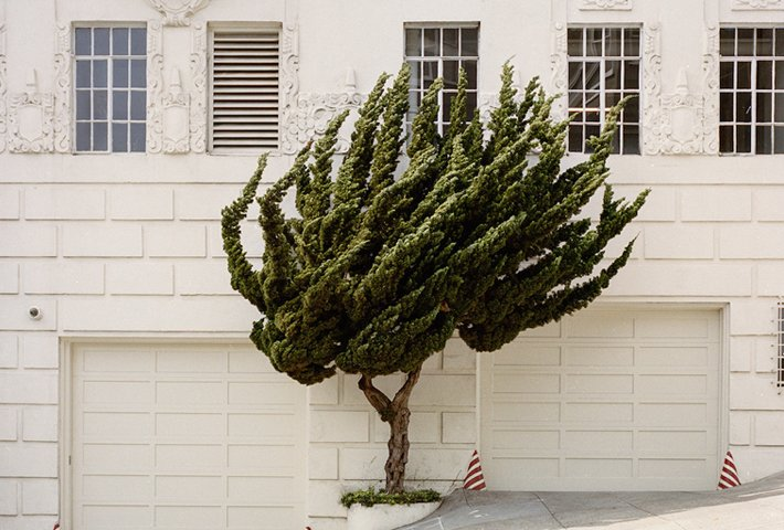 A Topology Of Californian Topiary