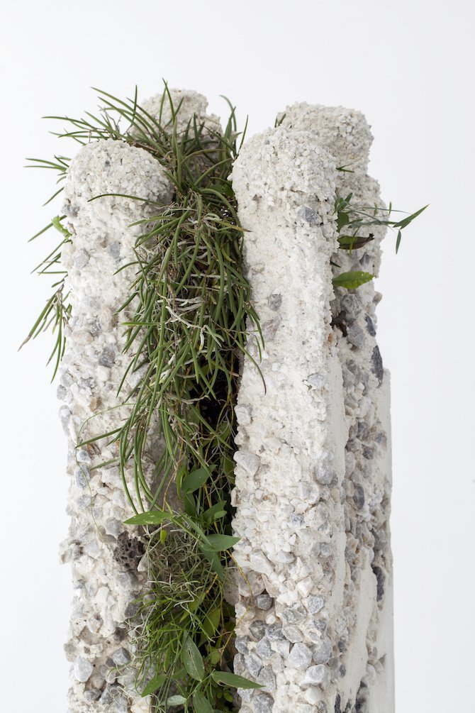 Jamie North Fills Concrete With Australian Plants Ignant Com