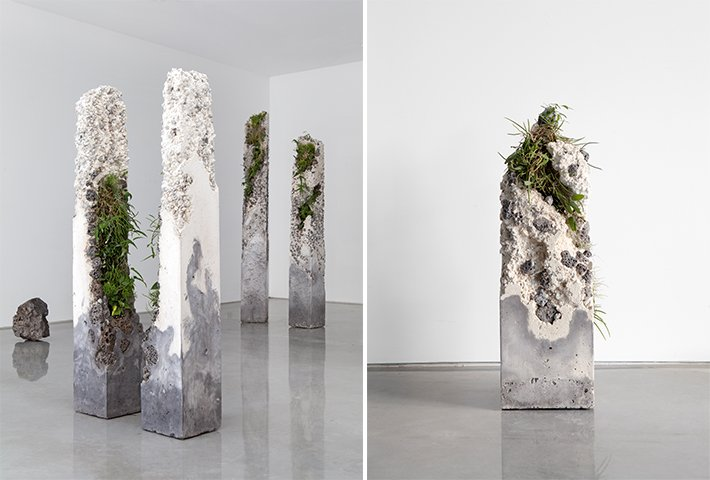 Jamie North Fills Concrete With Australian Plants
