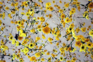 Rebecca_Law_The_Yellow_Flower_04