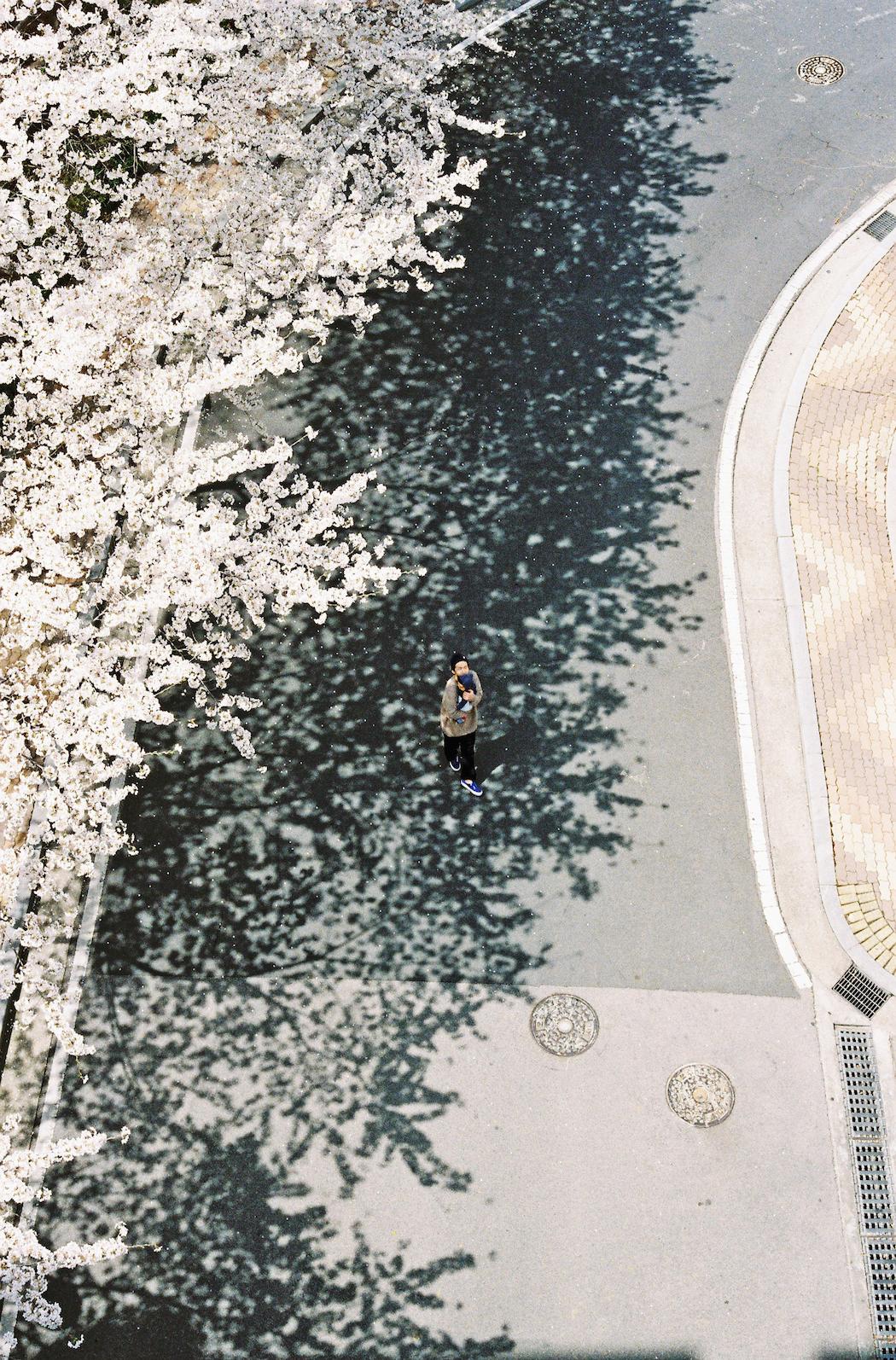 hasisi-park_photo_012