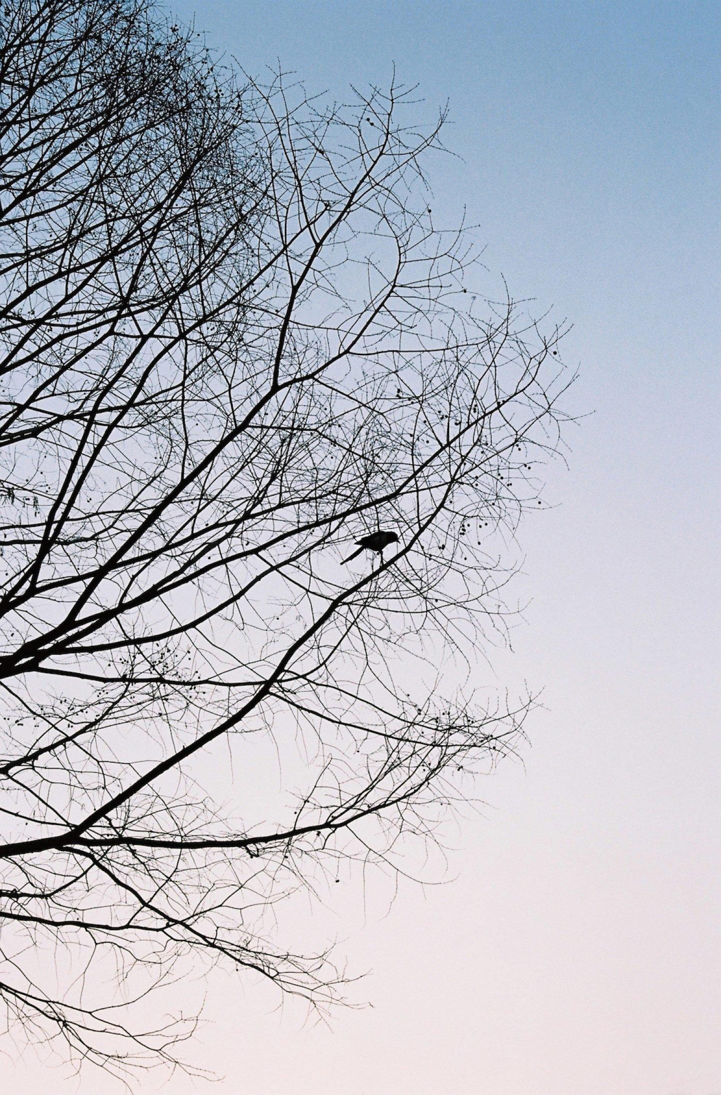 hasisi-park_photo_021