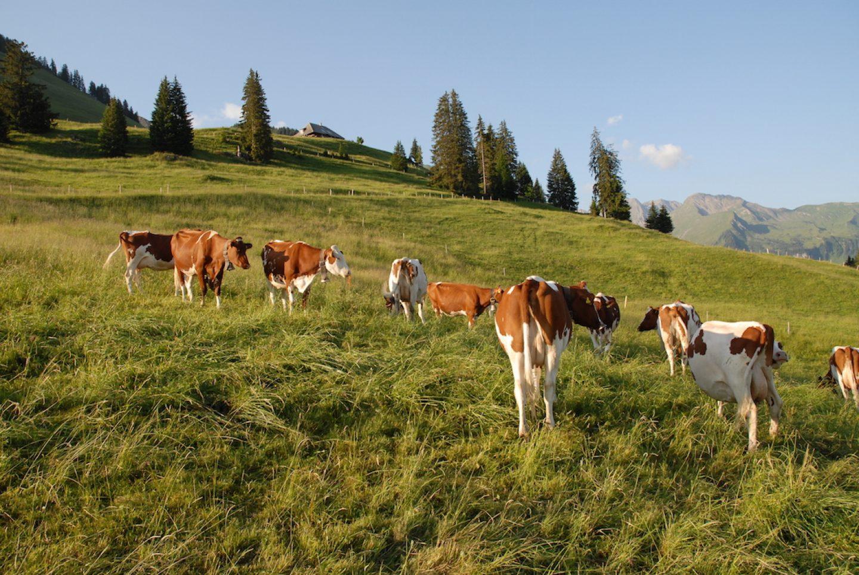 OnTheRoad_Switzerland_AlpHoesel_02