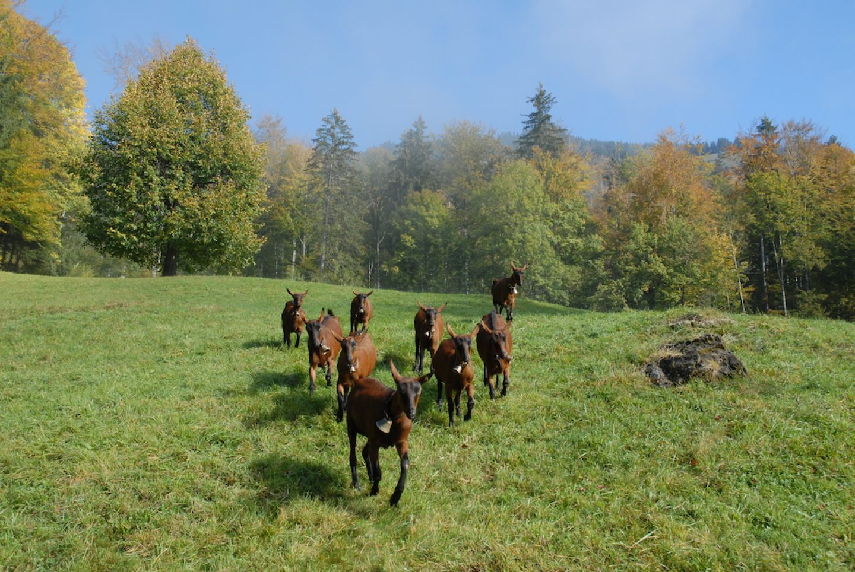 OnTheRoad_Switzerland_AlpHoesel_04