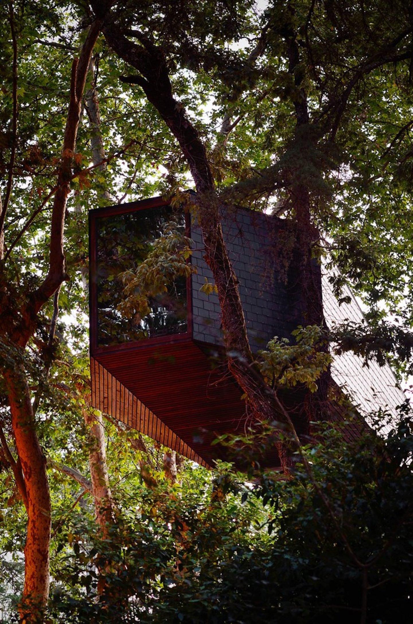 TREE_SNAKE_HOUSE_2094