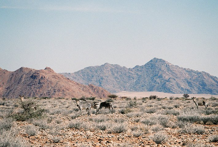Venturing Beyond The Desert In Namibia
