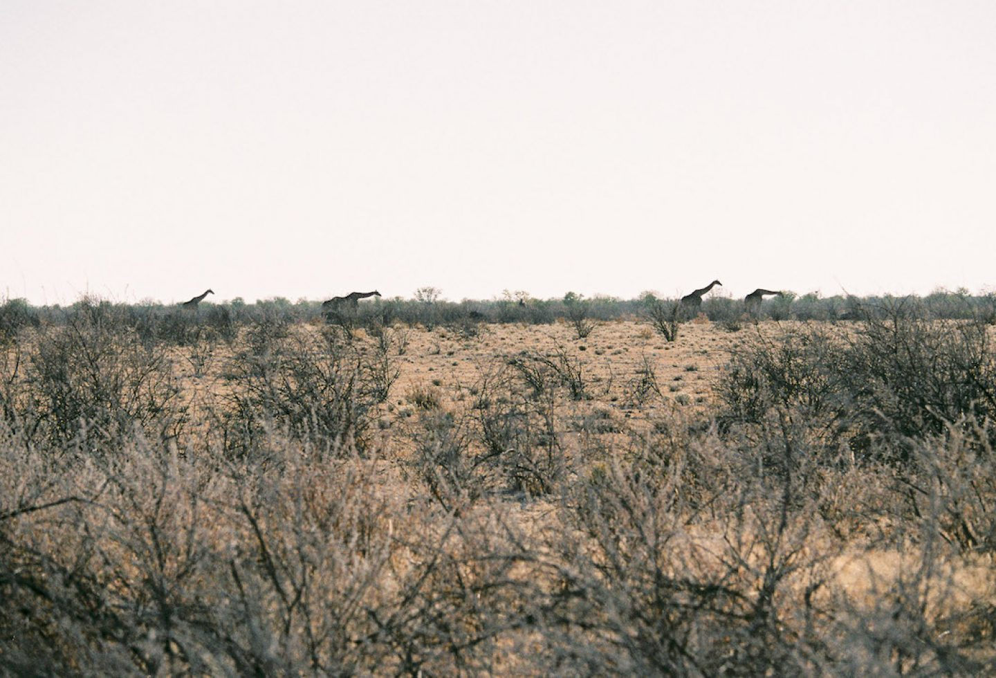 stefanhaehnel_namibia_preview-46