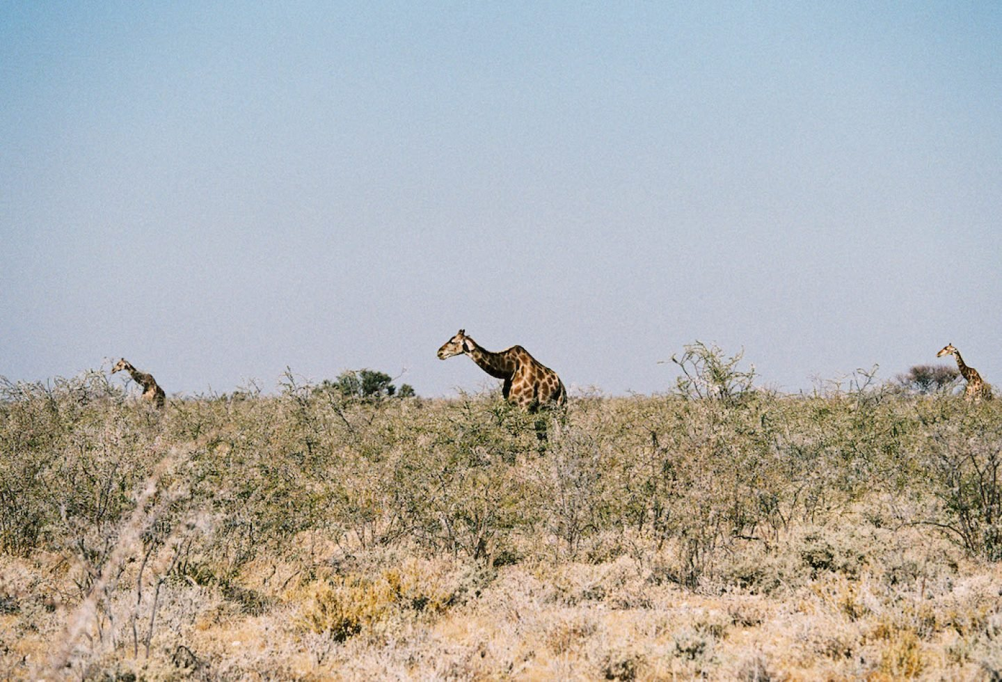 stefanhaehnel_namibia_preview-54