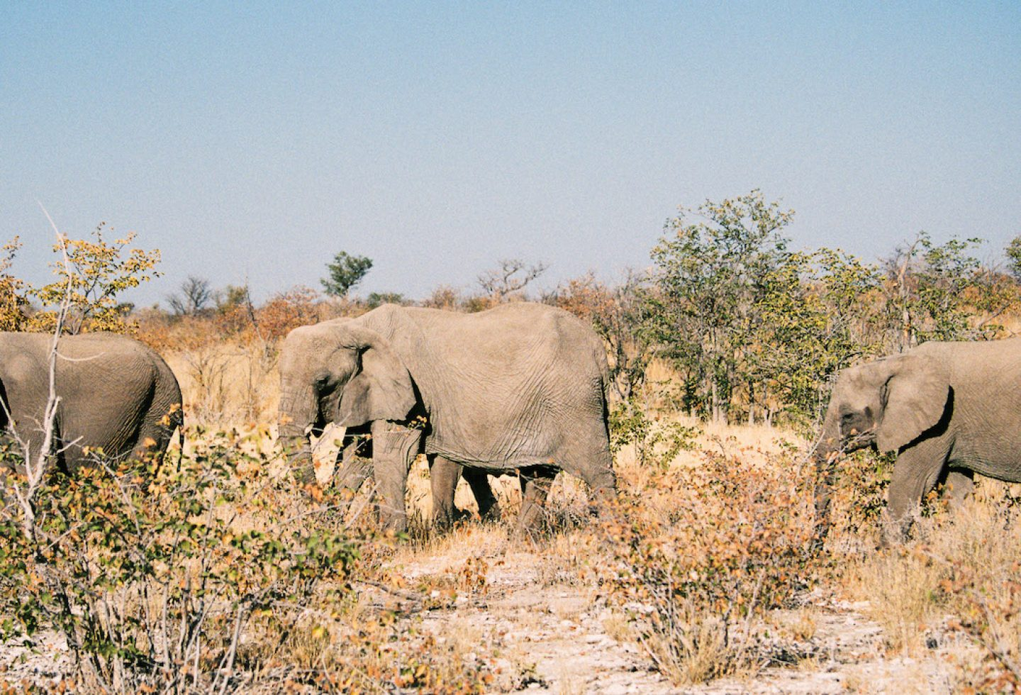 stefanhaehnel_namibia_preview-67