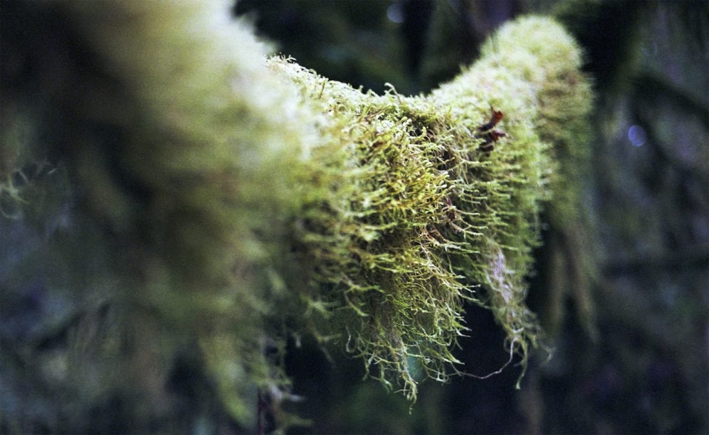 023_cathedralmoss_cji