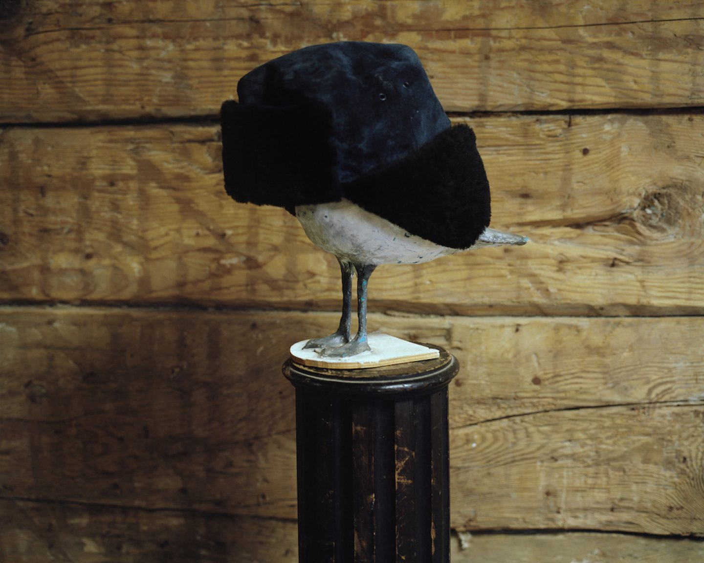 Plasticine seagull sculpture with hat. Bolderaja, 2013