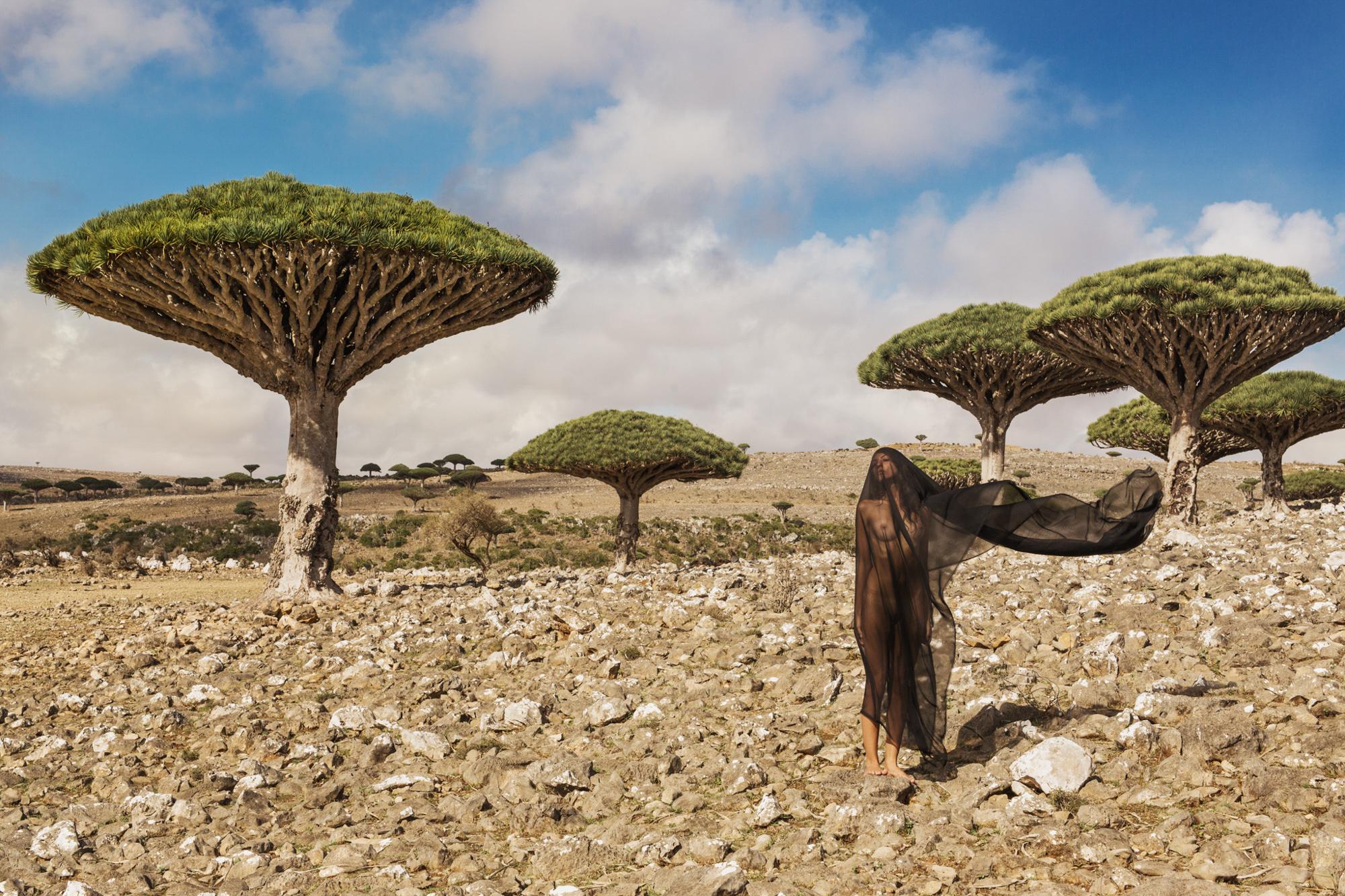 2016-10-27_58116fa0a76ba_02_CW_DTA_Socotra_Dracaena_cinnabari.jpg
