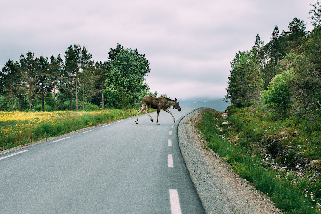 ontheroad_arctic_anzeostermann_29