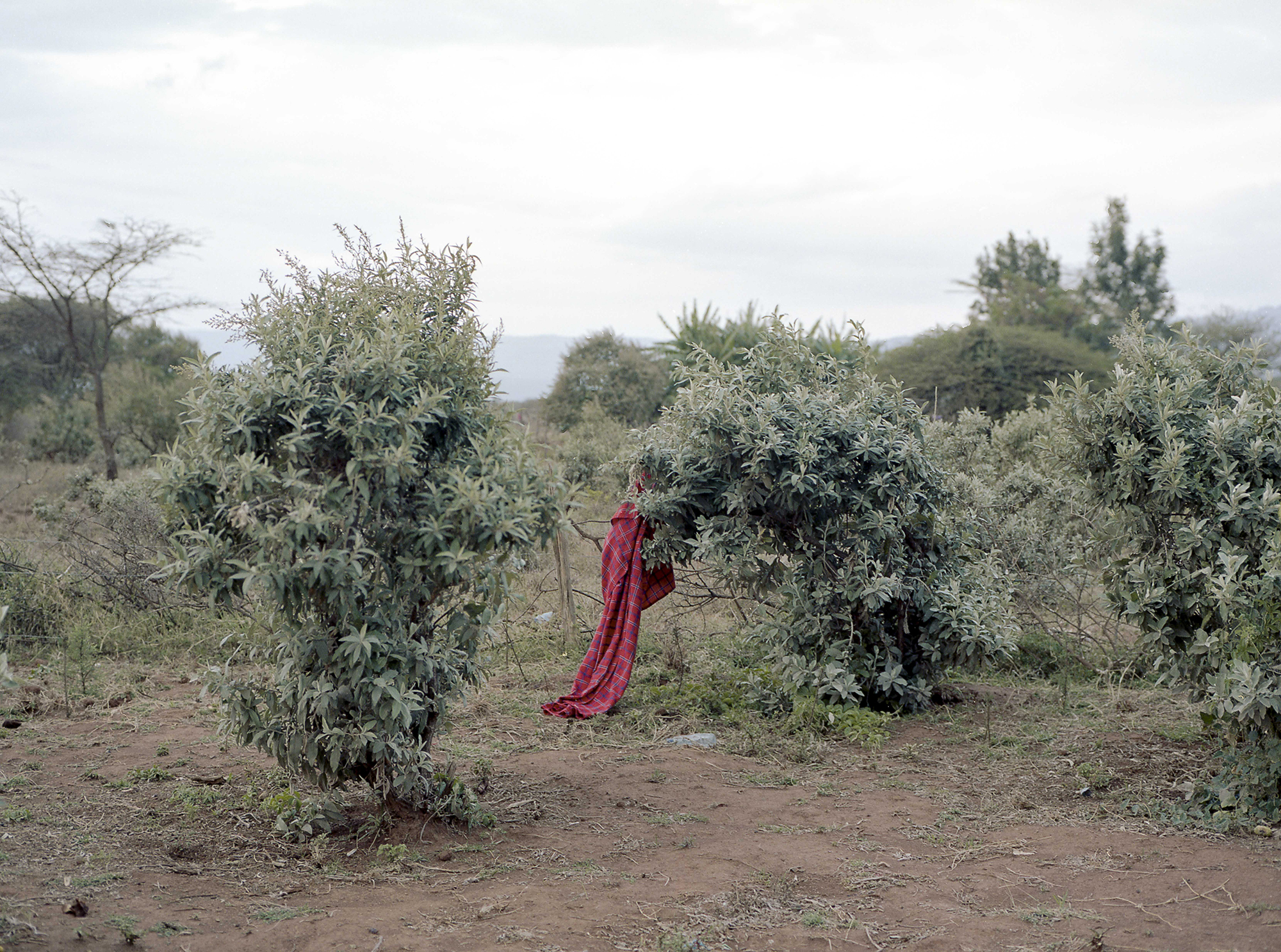 The Last Maasai By Adrien Blondel