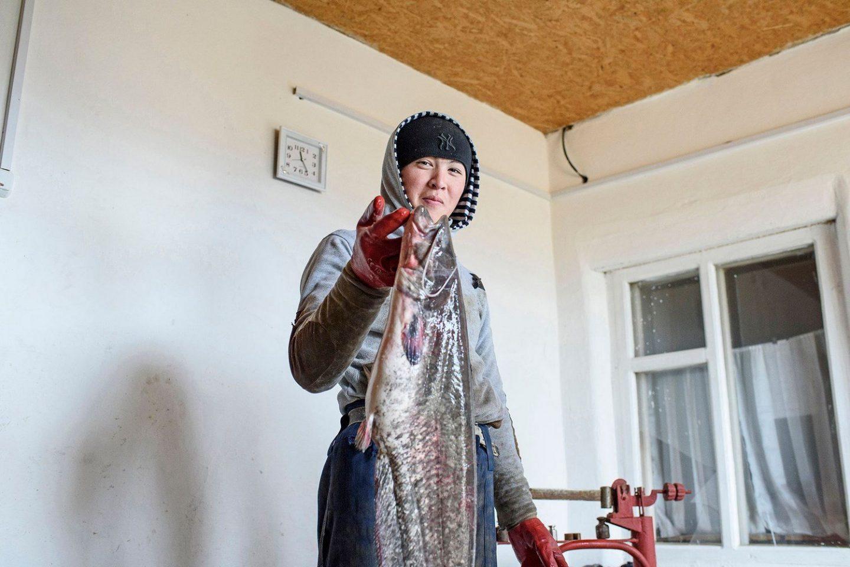A worker in a fish factory.Un ouvrier dans une usine de poissons.