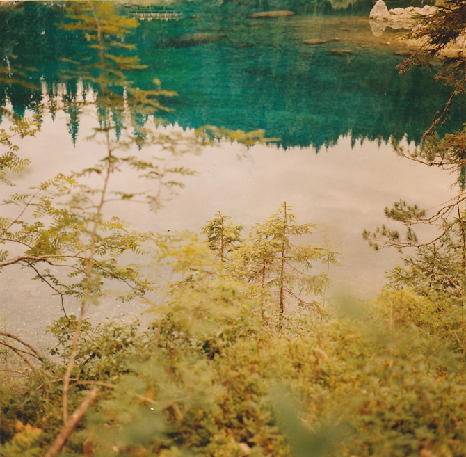 The Memory Of Trees By Silvana Maragliulo