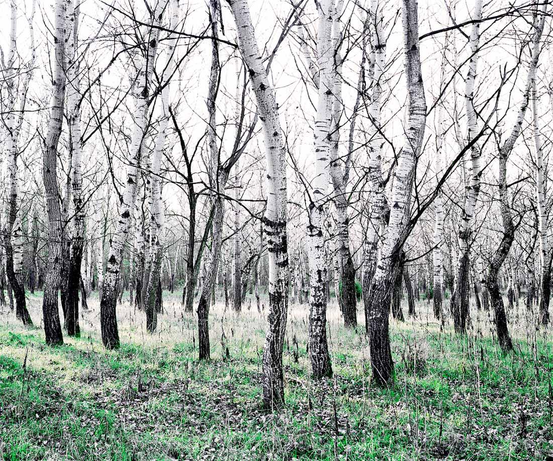 Green_Silence_Daniel_Kovalovszky-8