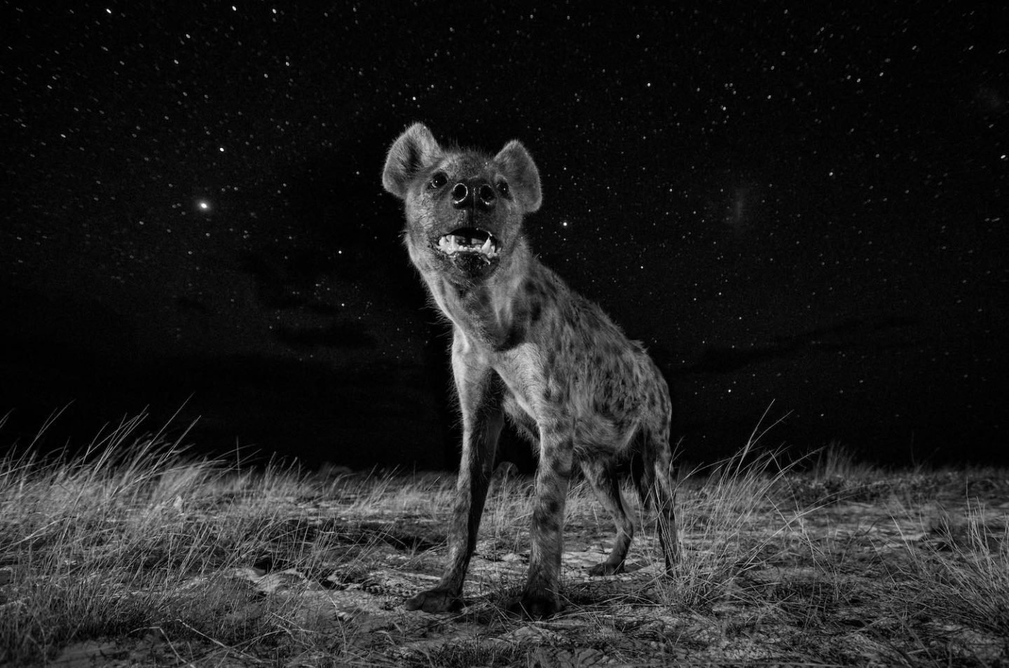 African Wildlife at Night
