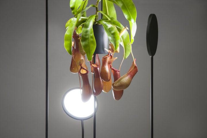 iGNANT-Design-Goula-Figuera-Viride-03
