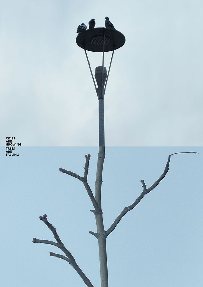Concrete Trees By Kateryna Zabusova
