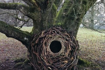 iGNANT_Photography_Andy_Goldsworthy_Land_Art_5
