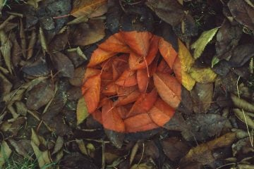 iGNANT_Photography_Andy_Goldsworthy_Land_Art_8