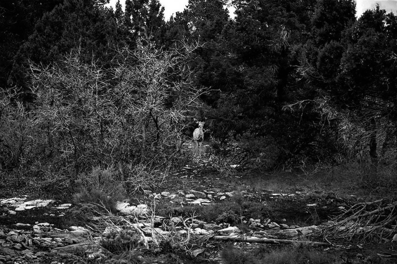 ignant_photography_jordie_oetken_003