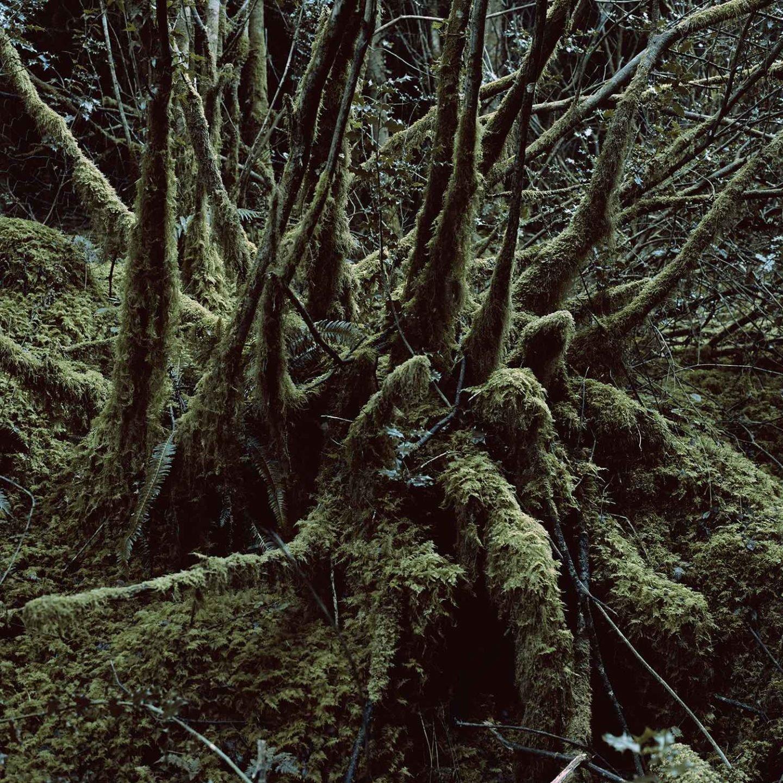 ignant_photography_nina_roeder_015