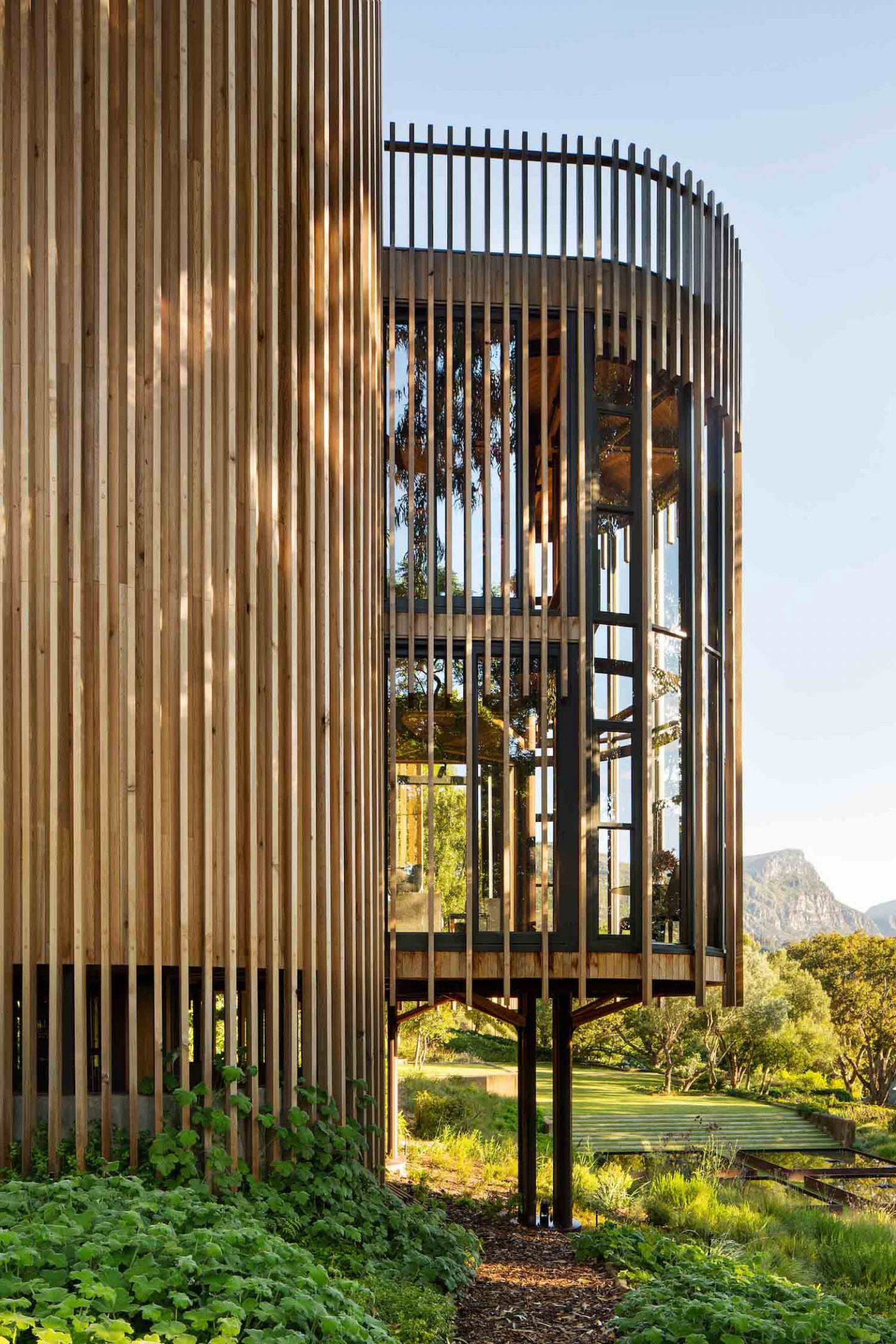 paarman-tree-house-by-mv-architecture-residential_dezeen_2364_col_13