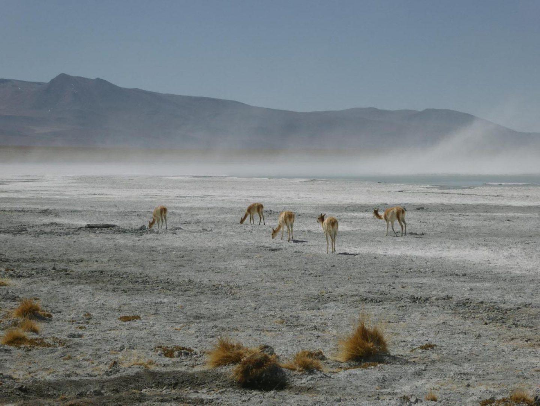 iGNANT_OnThe Road_Anke_Nunheim_Bolivia-5