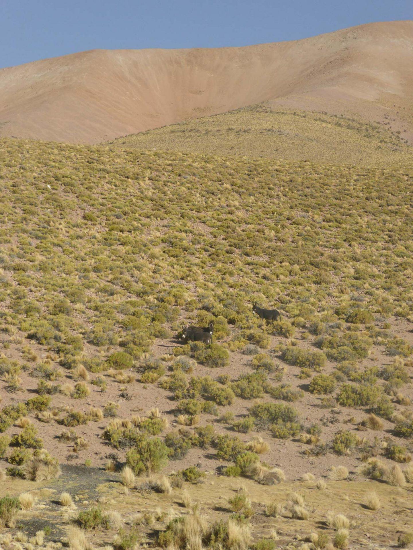 iGNANT_OnThe Road_Anke_Nunheim_Bolivia-9