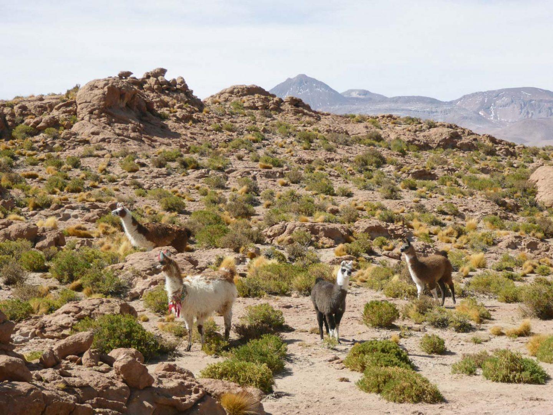 iGNANT_OnTheRoad_Anke_Nunheim_Bolivia