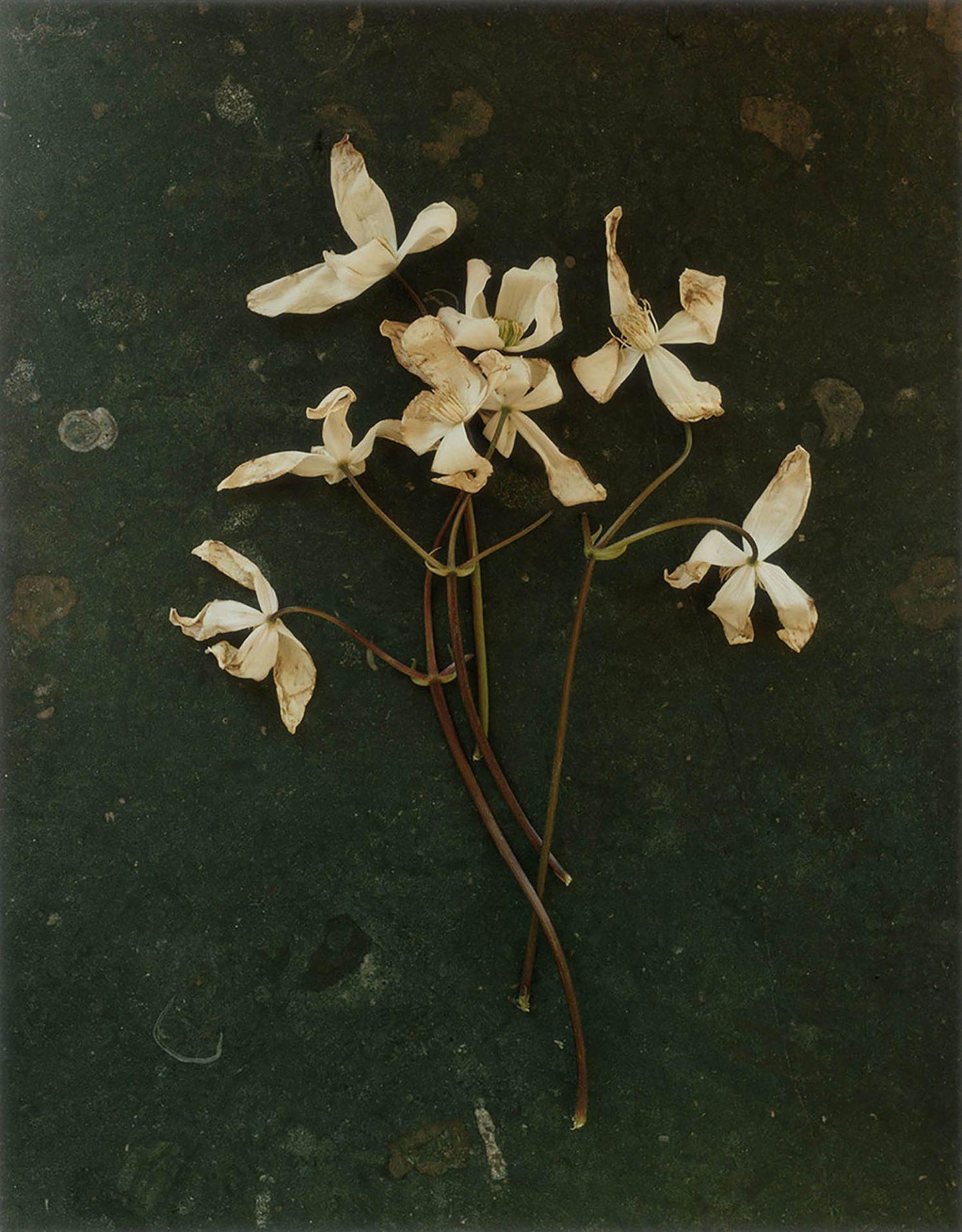 EH_Flowers.tif