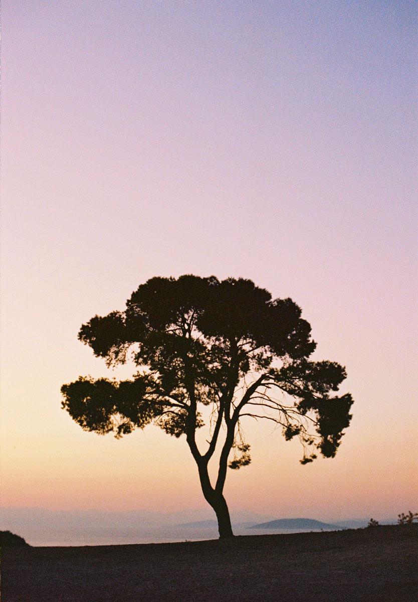 2017-09-29_59ce5b2a2f986_tree