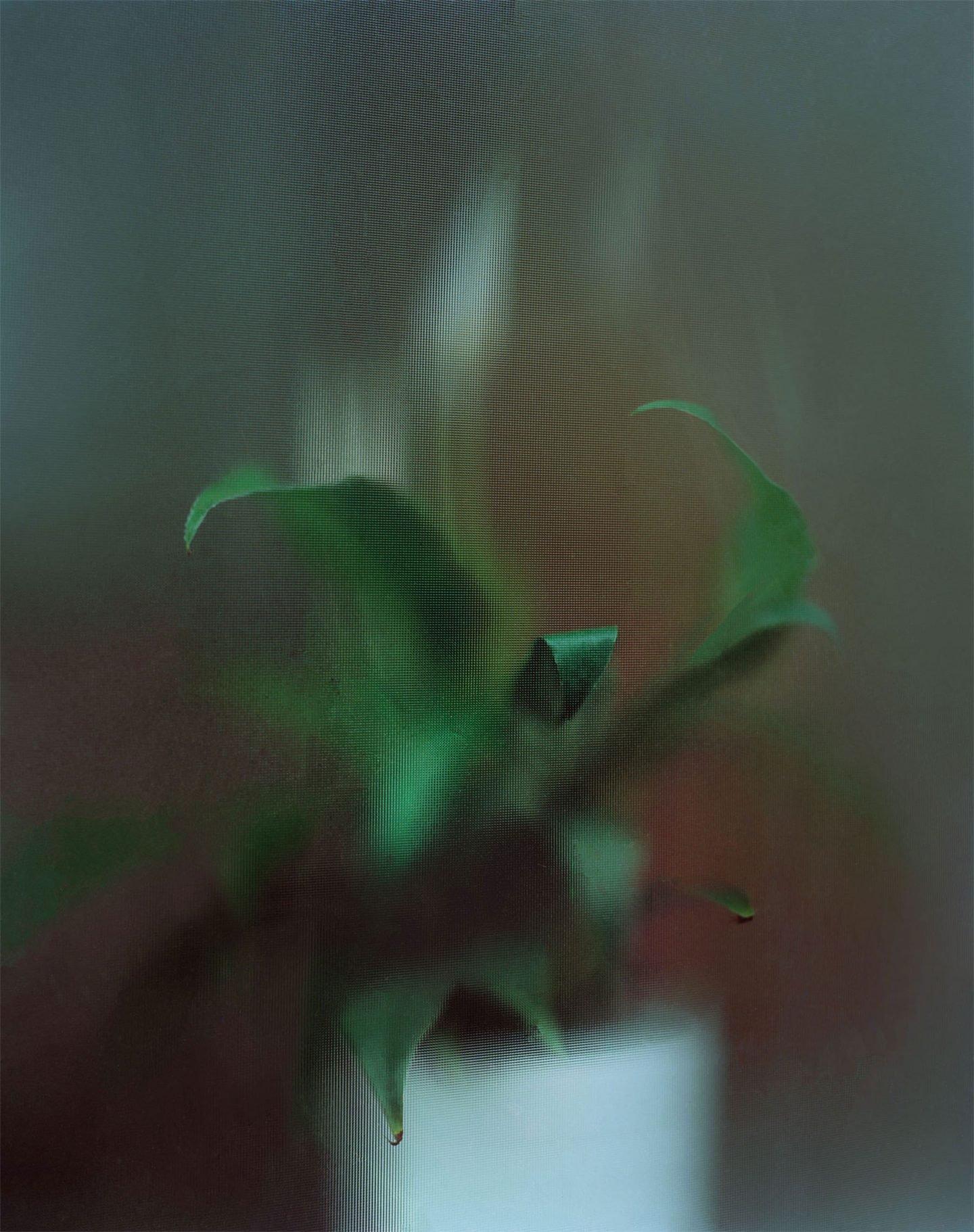 iGNANT-Photography-Tim-Palman-Wellard-001