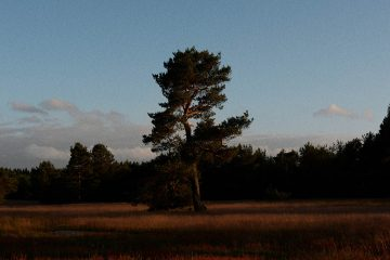 Ignant-Sigurd-Gruenberger-3