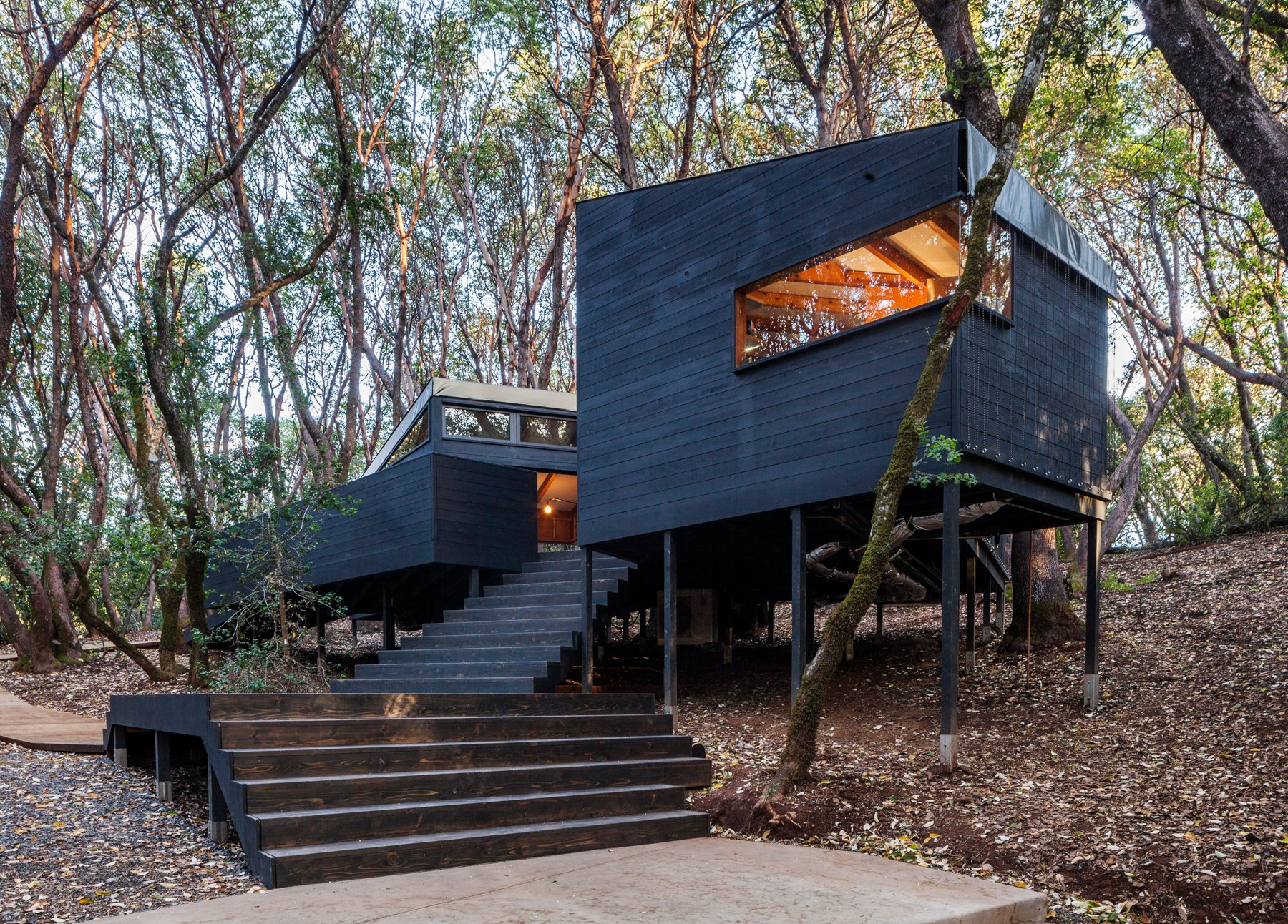the forest house in northern california ignant rh ignant com
