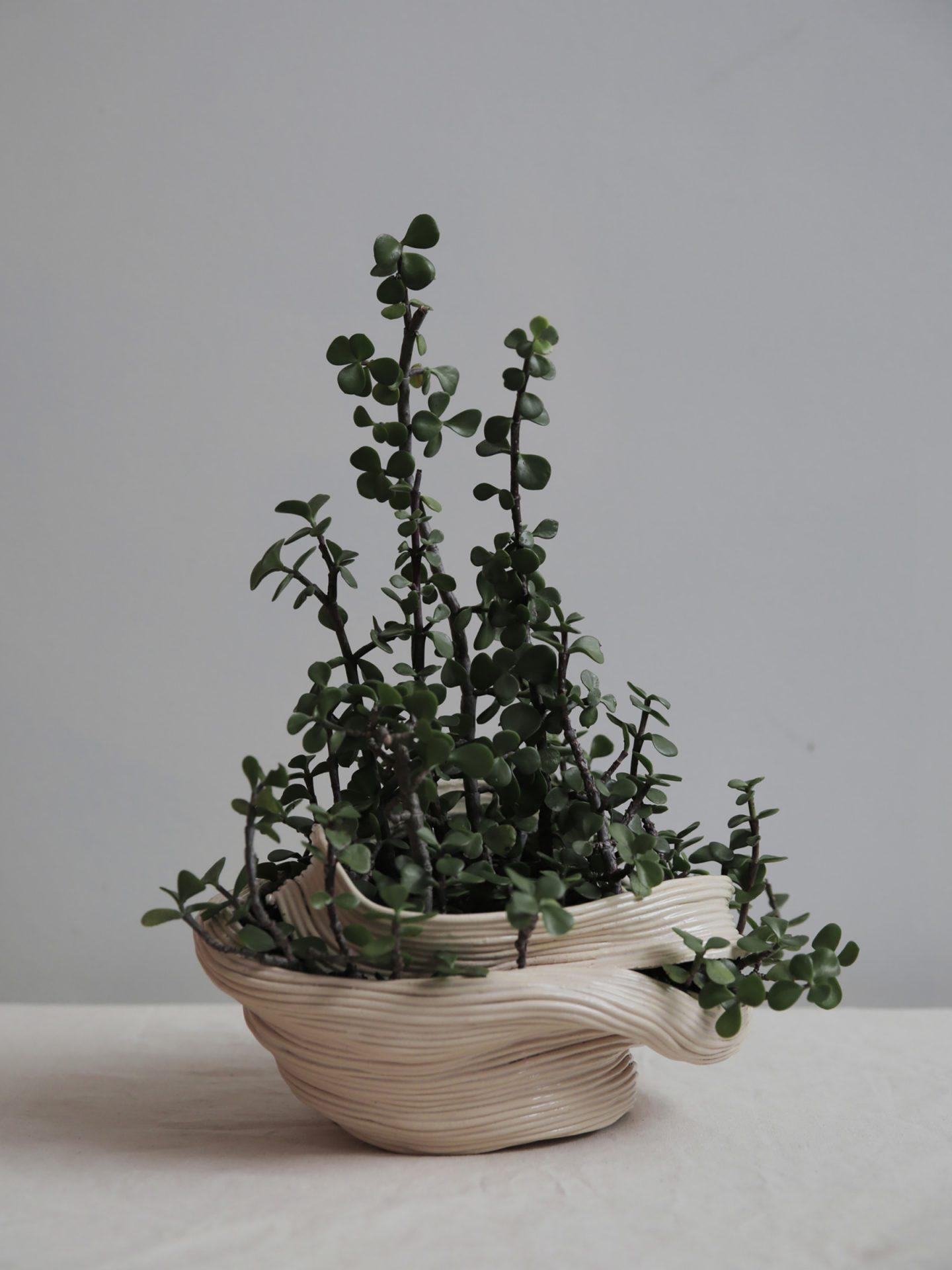 iGNANT-Design-Zhu-Ohmu-Plantsukuroi-03
