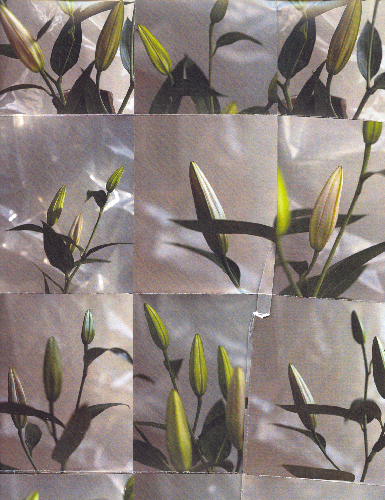 2018-01-25_5a69804d7d158_aysia-stieb-foot-tap-jaw-jerk-lillies-vinyl-flowers-grid-scan-photograph-01