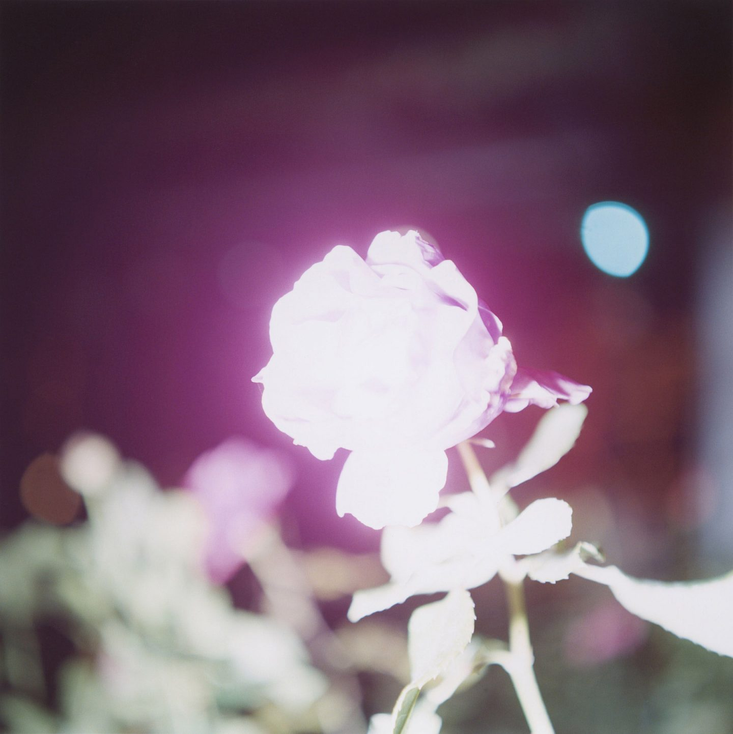 iGNANT-Photograophy-Rinko-Kawauchi-18