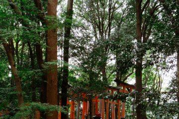 iGNANT-Photography-Will-Matsuda-Kyoto-003