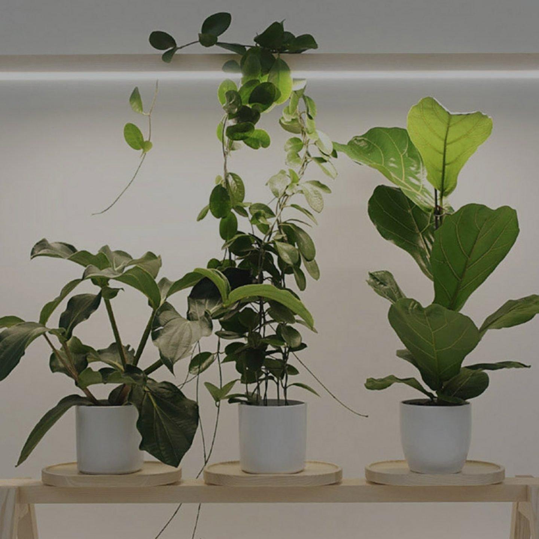 iGNANT-Design-Kauppi-Kauppi-GreenFrame-001c