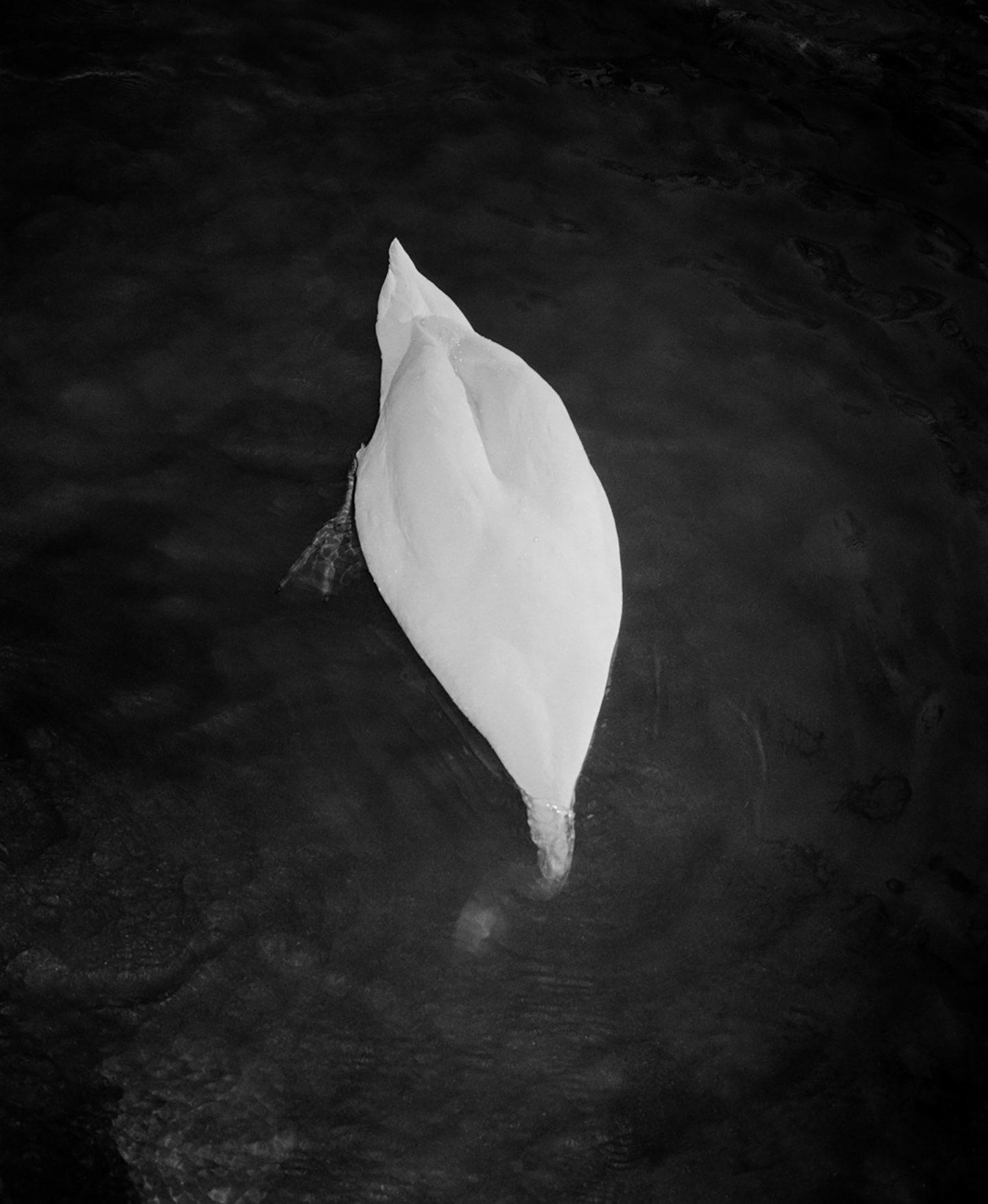 iGNANT-Photography-Matt-Eich-01