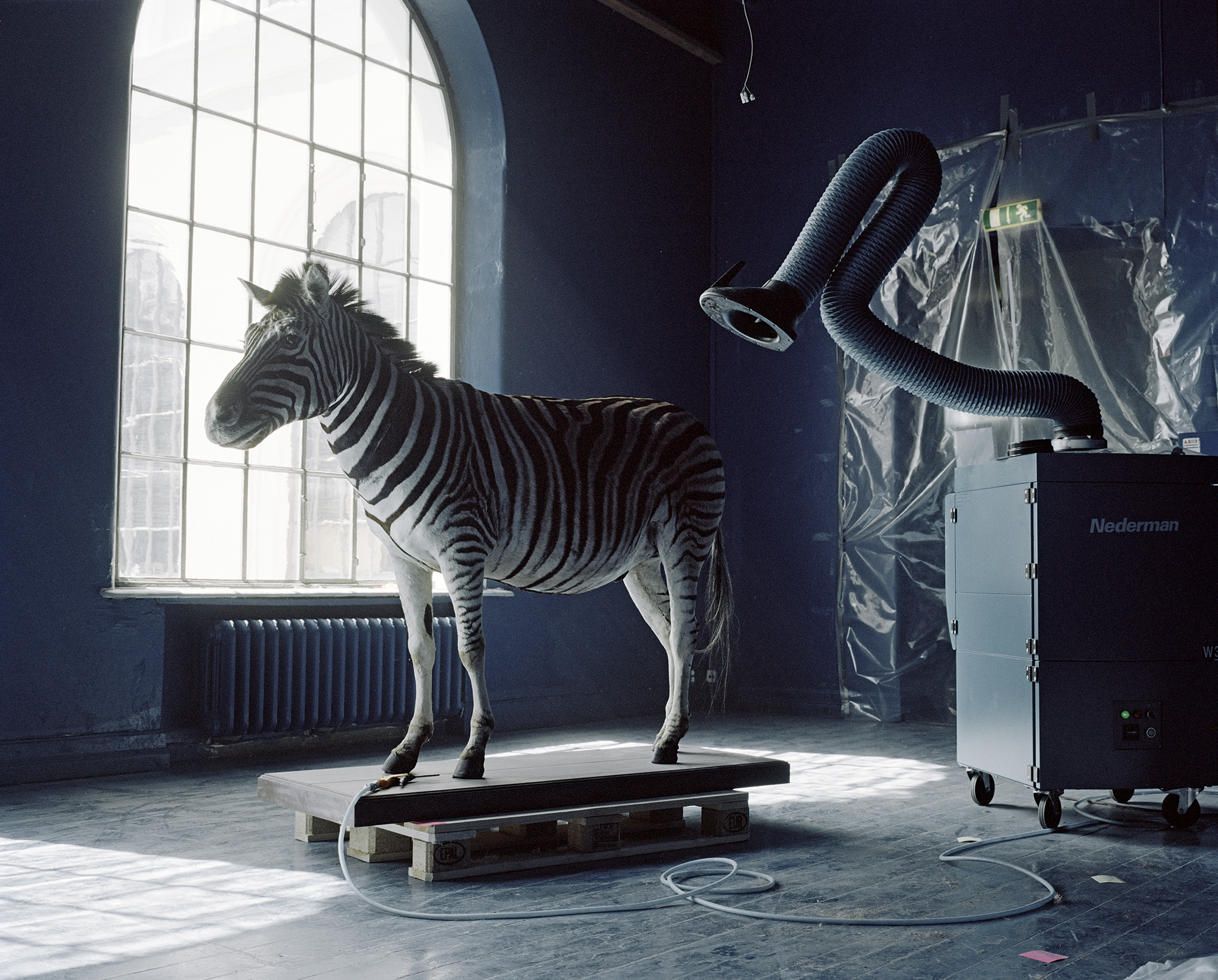 A Moveable Beast/Burchell's Zebra (equus burchellii)