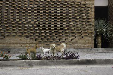 iGNANT-Architecture-Ariel-Valenzuela And-Diego-Ledesma -Casa-Papagayo-L